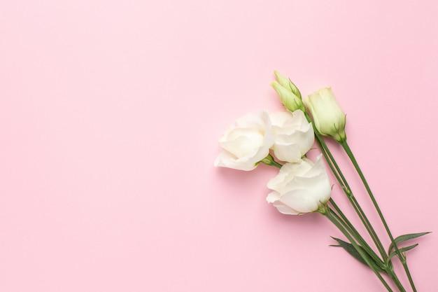 ピンクの白い花