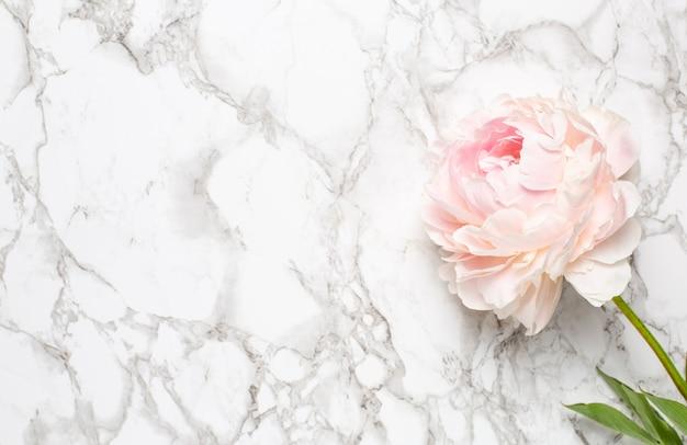 Красивый белый пион цветок на мраморной поверхности с копией пространства