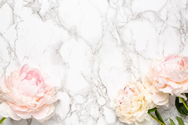コピースペースを持つ大理石の表面に美しい白い牡丹の花