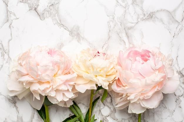 コピースペースを持つ大理石の表面に美しい白とピンクの牡丹の花