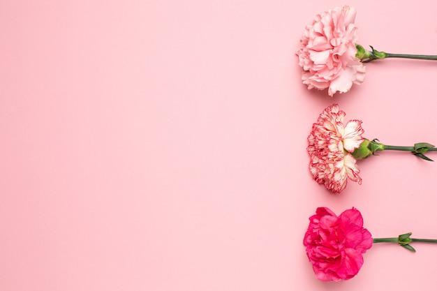 ピンクの背景にコピースペースを持つ美しいピンクのカーネーションの花