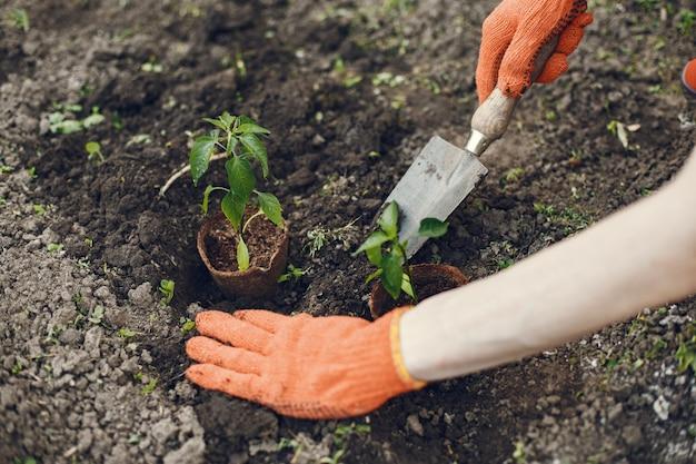 Руки женщины в перчатках посадки молодых растений