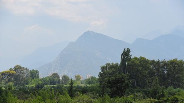 山の夏の風景