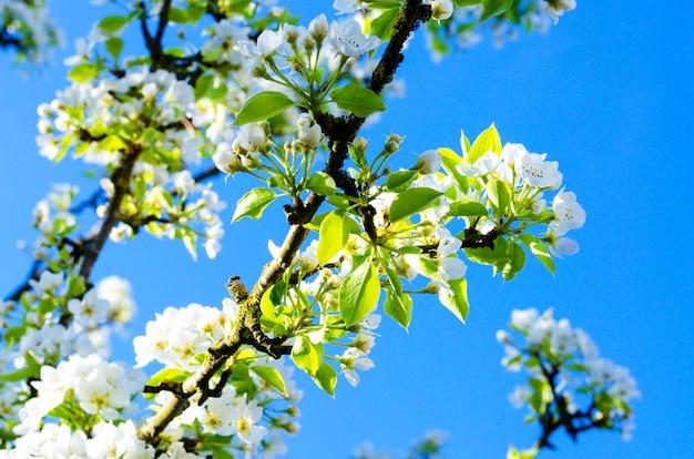 Цветущие белые цветы на тре