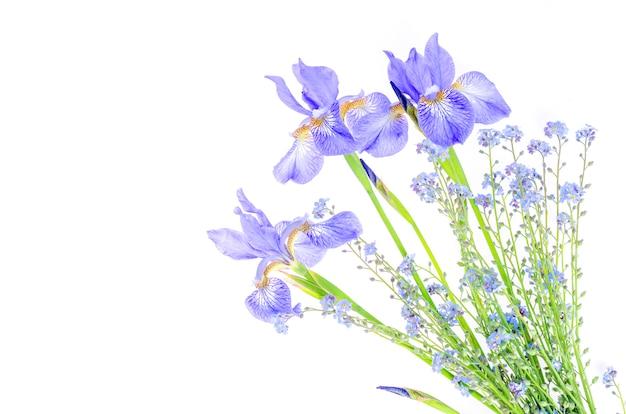 Нежные фиолетовые садовые ирисы, изолированные на белом.