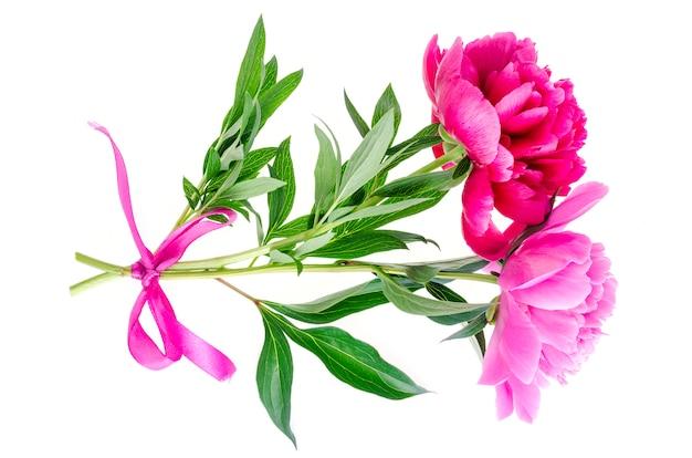 美しいピンクの牡丹の花の分離