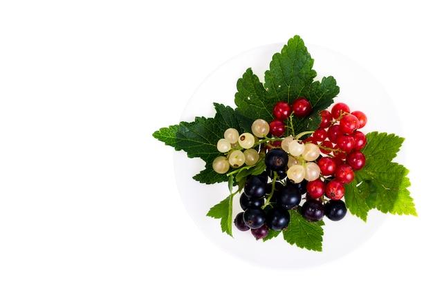 明るい背景に黒、赤、白スグリの果実