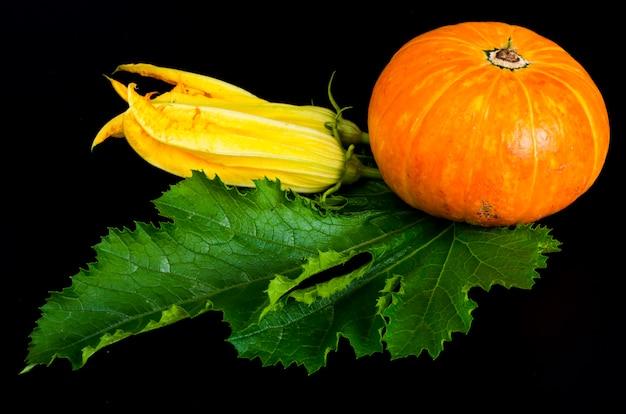 黒の背景に装飾的な小さなオレンジ色のカボチャ。