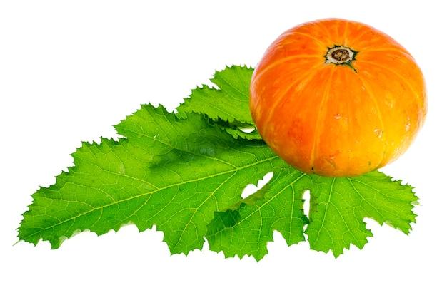 白い背景に分離された小さなオレンジ色のカボチャ。