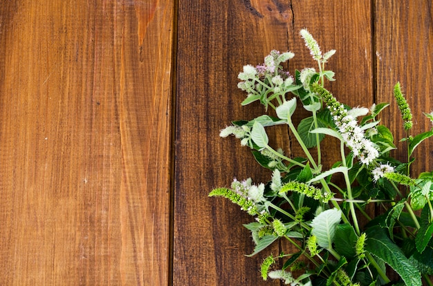 ペパーミント。花とミント草をクローズアップ。