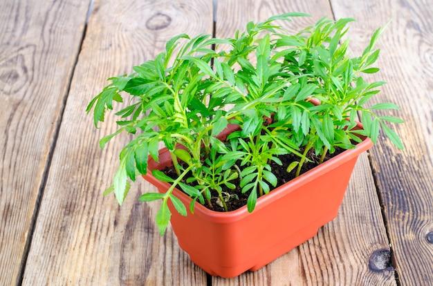 茶色の鍋に花の緑の苗
