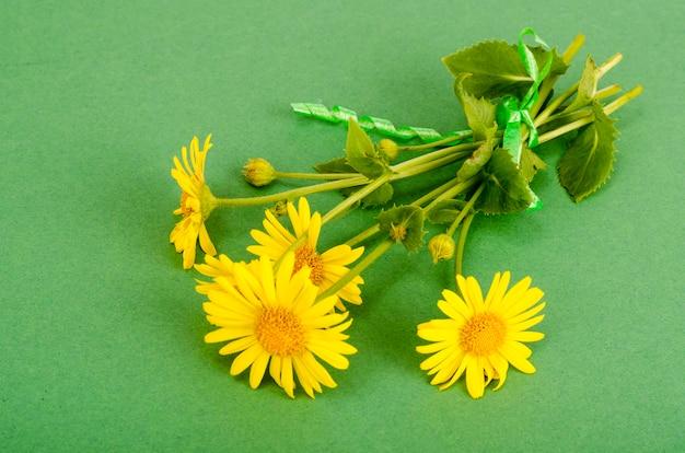 Дикие полевые желтые цветы на ярком цветном фоне