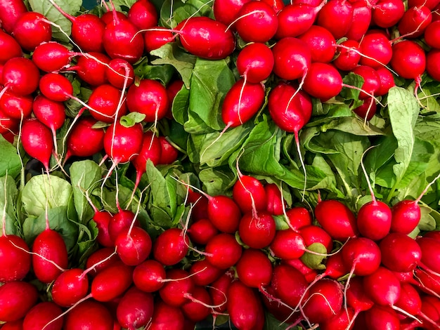 Красочный спелый и сочный свежий красный редис
