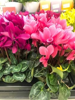 スーパーでの春の花の販売