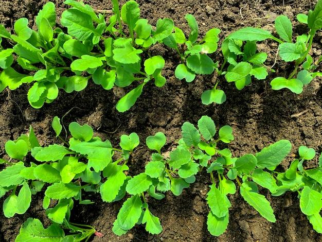 Молодые зеленые побеги и листья в постели в теплице