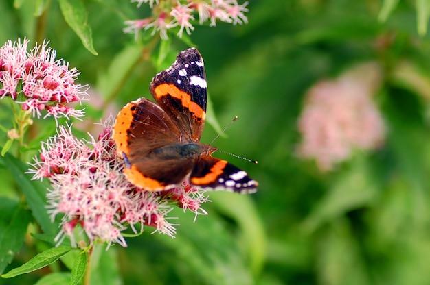 オープン翼を持つ蝶