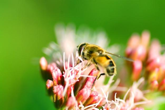 Пчела на цветы