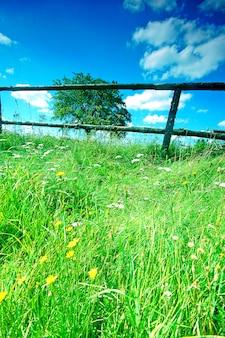 咲く花と芝生
