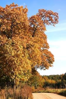 茶色の葉を持つツリー