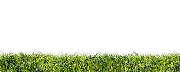 新鮮な草のクローズアップ