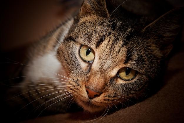 猫横たわっ