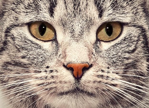 猫の顔のクローズ