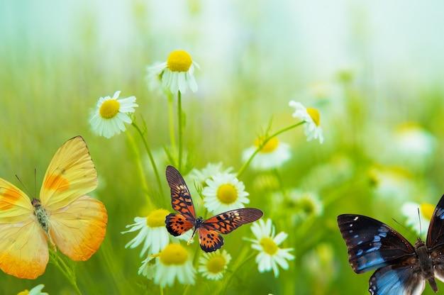 Бабочка на ромашке