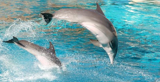 Дельфин прыжки