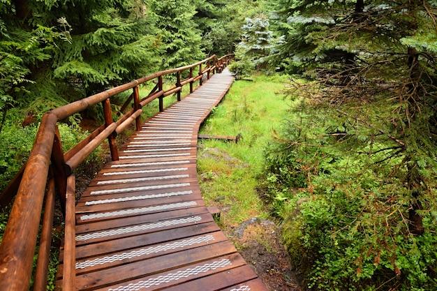 «деревянный путь в лесу»
