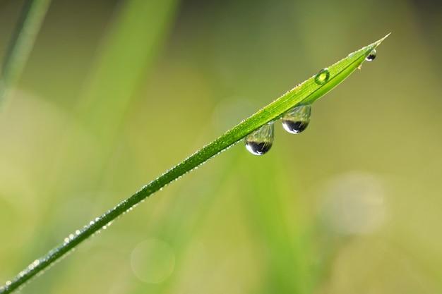 «трава с каплями воды»