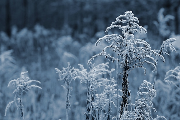 「畑の凍った植物」