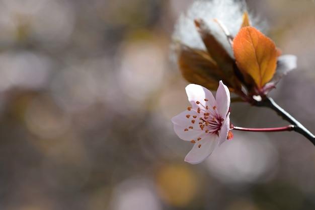 «маленький цветок яблони»