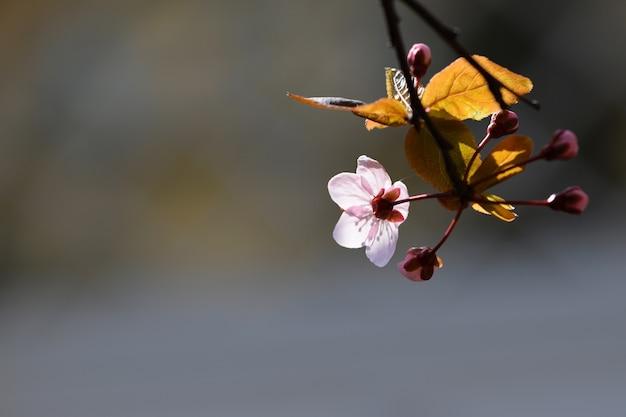 «нежный цветок и ростки на ветке дерева»