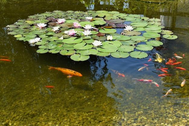 「花と魚の池」