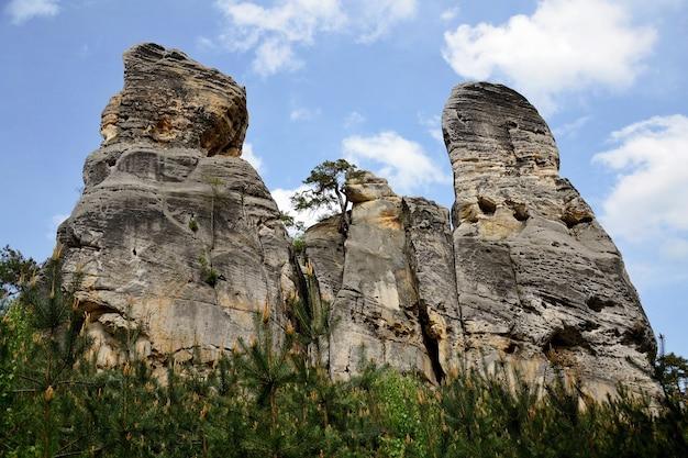 «высокие скалы в лесу»