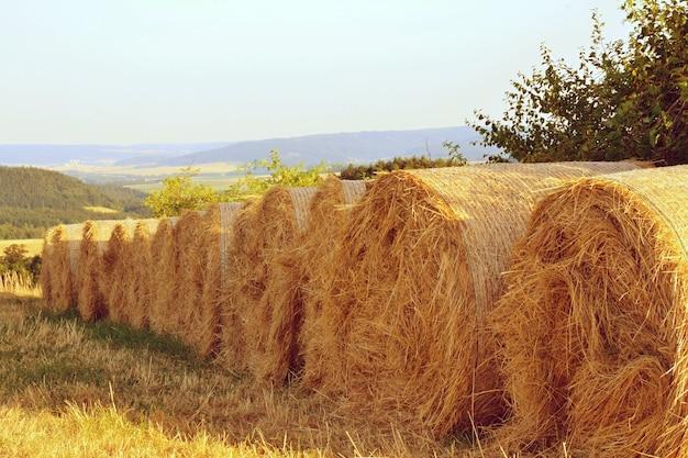 «рулоны сена на поле»