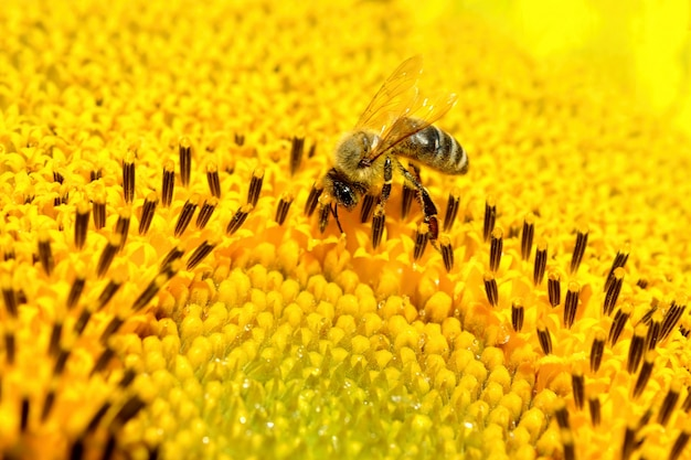 «пчела на желтом цветке»