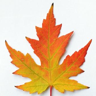 「勾配秋の葉」