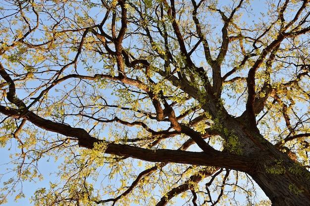 日没の太陽の美しい木。自然の背景の生態学的な概念。