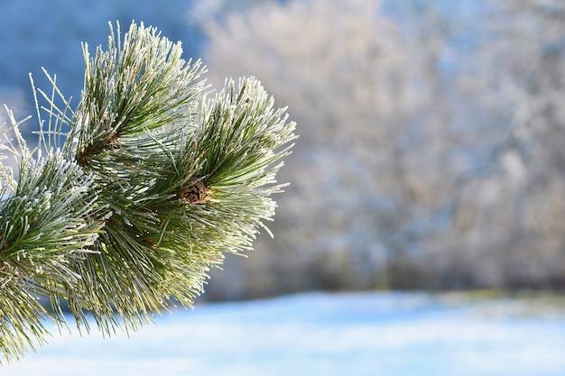 Мороз и снег на ветвях. красивый зимний сезон. фотография замороженной природы.