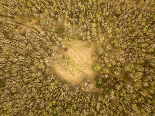 Аэрофотосъемка березового леса