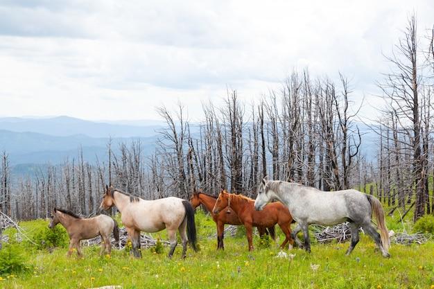 山の緑の山の谷で放牧馬。完璧な岩の風景。実行している灰色と茶色の馬と日当たりの良い牧草地