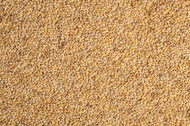 Крупный план сырой бежевый перловой крупы. концепция здорового питания