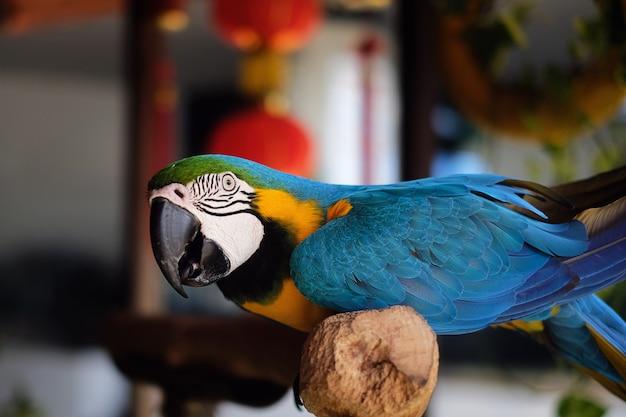 Красочный ара попугай ара крупным планом