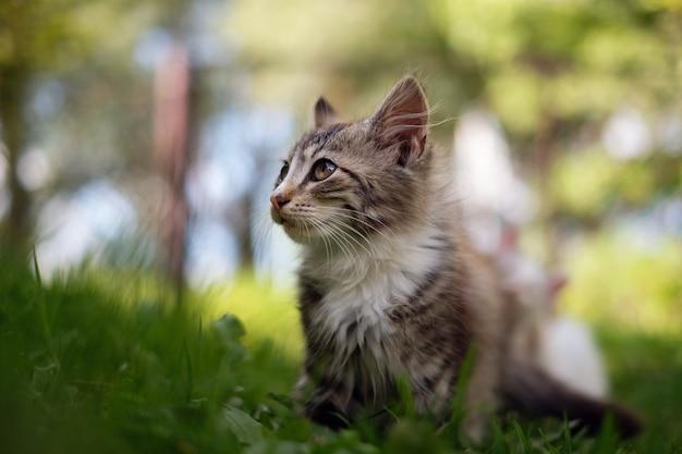 Любопытный милый котенок в зеленой траве