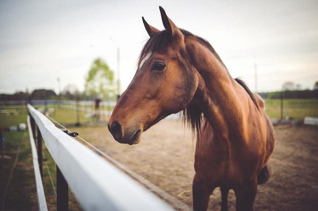 馬の頭がクローズアップ