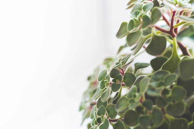 白い背景の上の葉