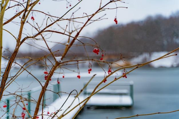 冬の橋と川の近くの霜で覆われた枝に赤い熟したガマズミの果実。