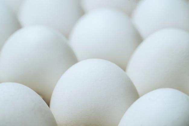 ホワイトチキン卵卵のグループ