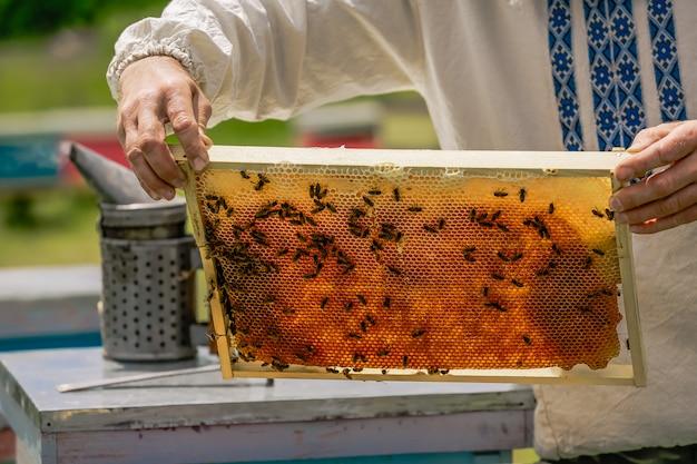 養蜂家の手は養蜂場でミツバチやハチの巣を使用しています。ミツバチの巣箱のフレーム